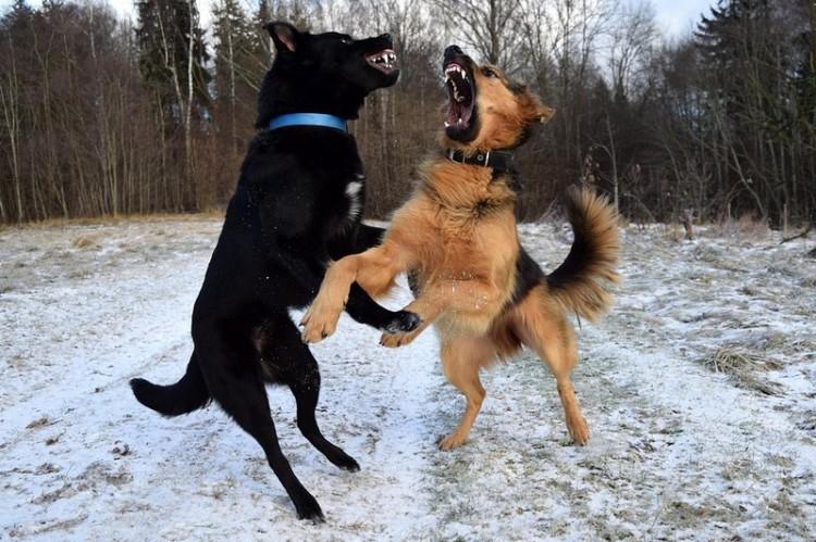 Harci kutyáit uszította támadásra egy hajdúhadházi