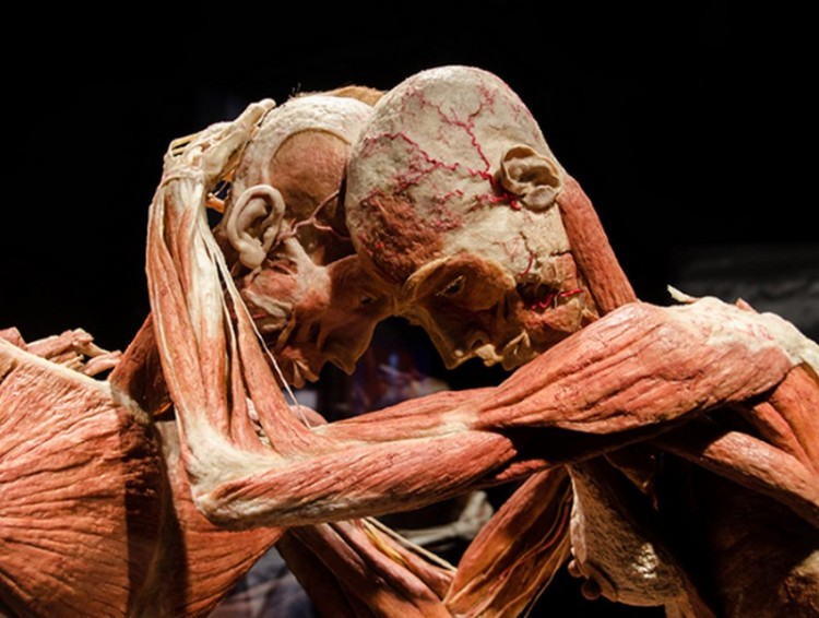 Test: valódi szervekkel jön a világhírű kiállítás