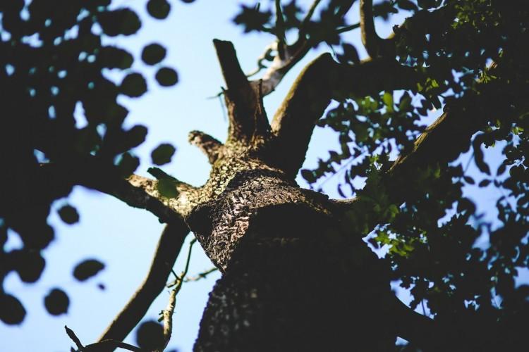 Leszakadt faág tett kárt Debrecenben