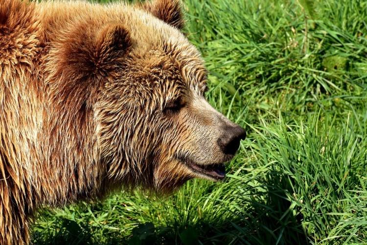 Ismét medvét láttak, most Mályinál