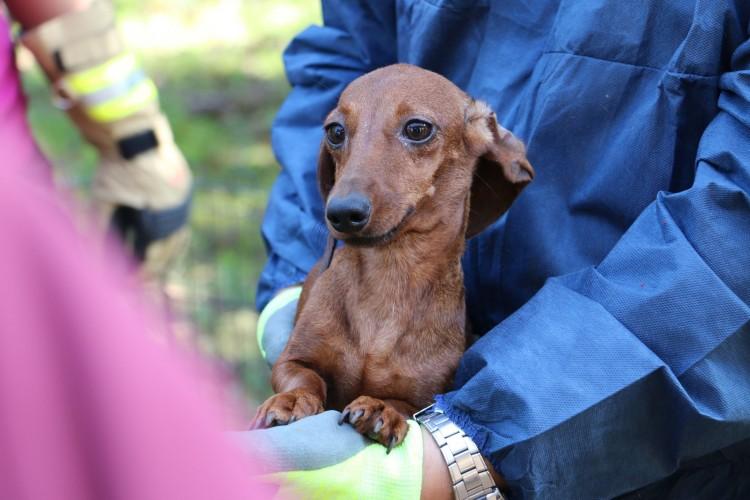 92 kutyát mentettek ki egy barcsi ház szobájából