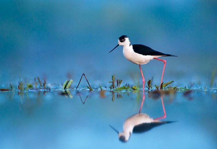 Hajlékony szépség az Év madara