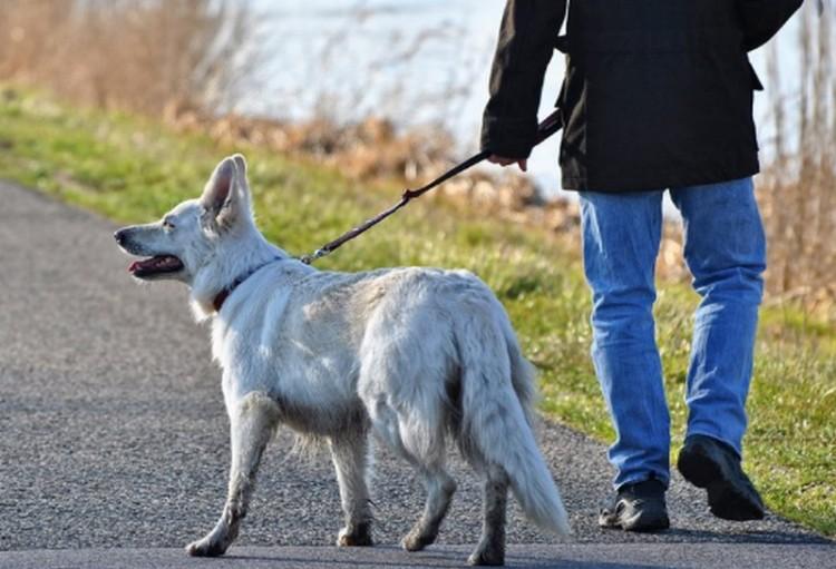 Közös kutyasétáltatás és adománygyűjtés Debrecenben