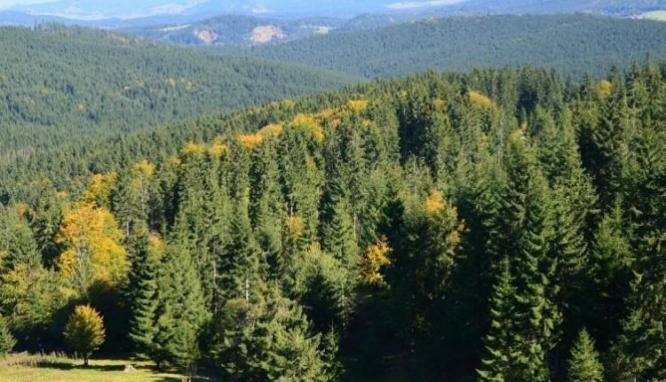 A kínai Alibabán árulják a román erdőket