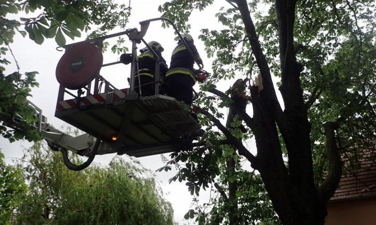 Parkoló autóra dőlt fa Debrecenben