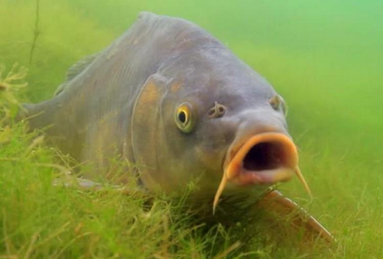 Valami bűzlött a tiszavasvári halaknál