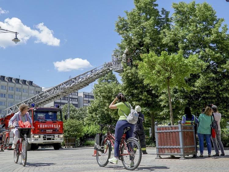 Darazsak miatt riasztottak Debrecen belvárosában – FOTÓK