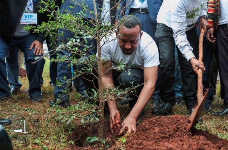 Összefogott az ország: 200 millió fát ültettek egy nap alatt
