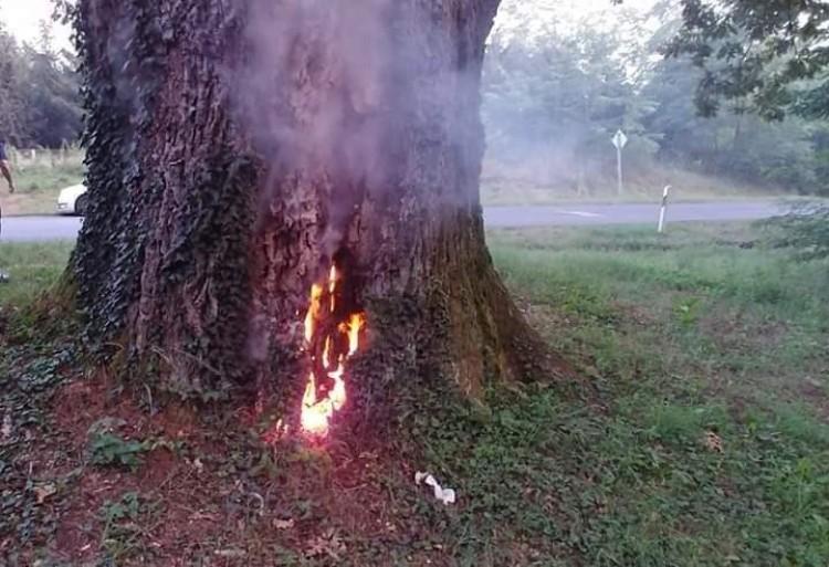 Felgyújtották a legendás betyár 300 éves tölgyfáját