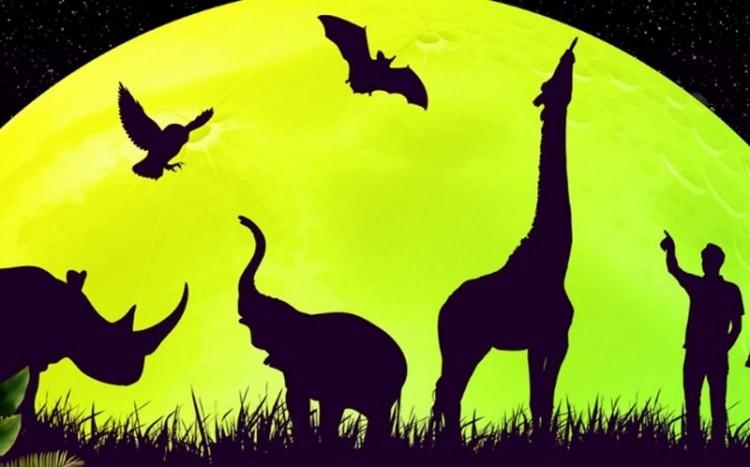 Kinyit éjjel Miskolcon az állatkert