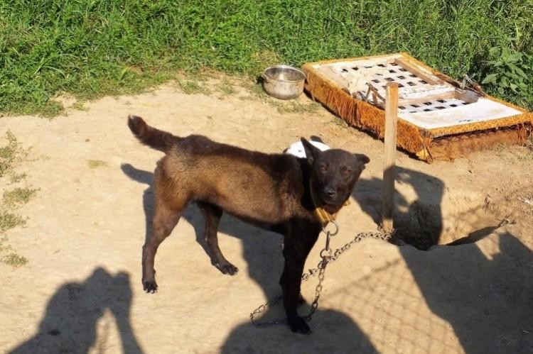 Láncra verte és éheztette kutyáit egy berettyóújfalui nő