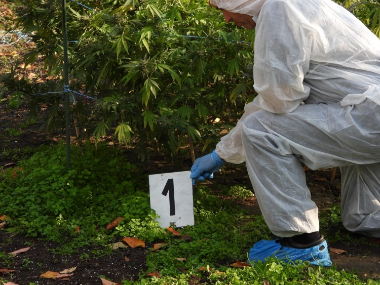 Úgy termesztették a marihuánát Püspökladányban, mint Mexikóban