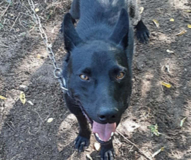 Beismerte kutyája felakasztását a bodaszőlői gazda