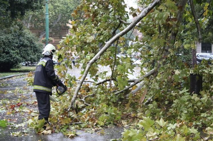 Autóra szakadt faág Berettyóújfaluban