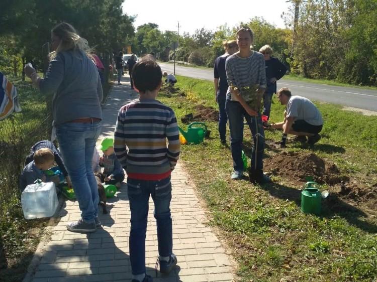 Több ezer fát készülnek elültetni Debrecenben és a megyeszerte