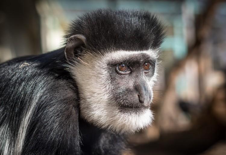 Különleges majom örökbefogadóját keresik Debrecenben