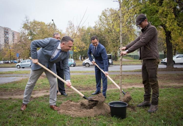 Debrecen belehúzott: 5 év alatt 10 ezer fa