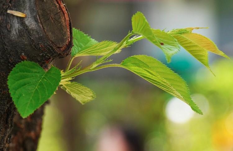 Diákhitelből ültetnek fát Debrecenben