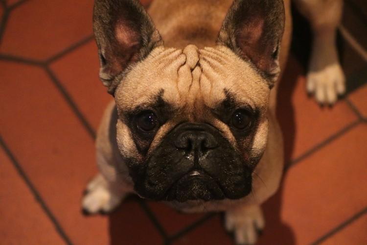 Debreceni gazdik, pár hét maradt regisztrálni a kutyát!