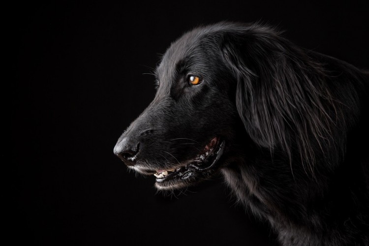 Vádat emeltek a kutyáját felkötő, hajdúböszörményi férfi ellen