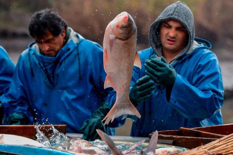 Szépen fogtak a halászok Hortobágyon. Úgy 1500 tonnányit! + FOTÓK!