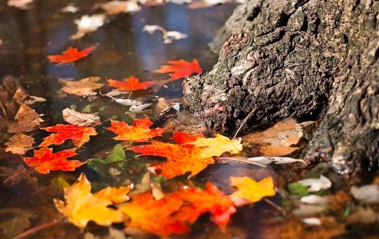Esőre és fagyra is készülni kell november utolsó napjaiban