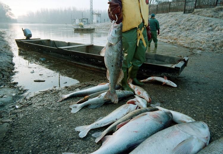 A Tisza gyásznapja: a cianidszennyezés óriási károkat okozott