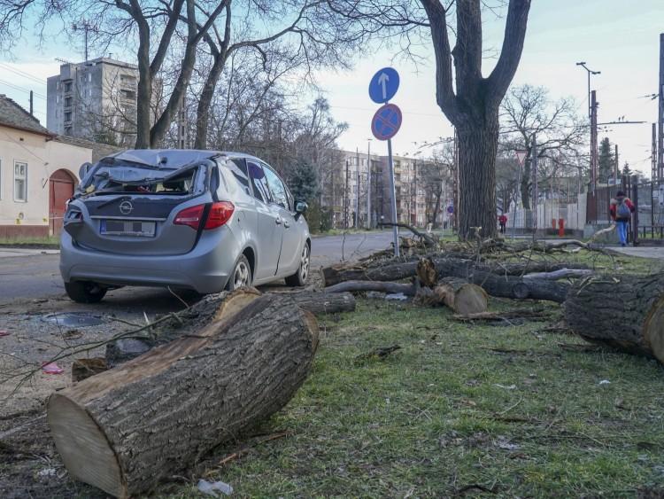 Autókat tört össze kidőlt fa Debrecenben – FOTÓK