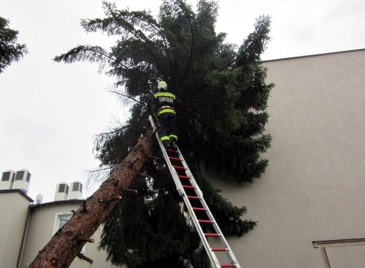 A fakidőlések mellett egy macska is munkát adott a hajdú-bihari tűzoltóknak