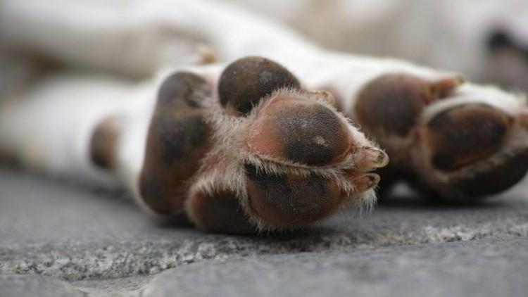 Kutyatetemek: itt a hajdúsámsoni intézkedéscsomag