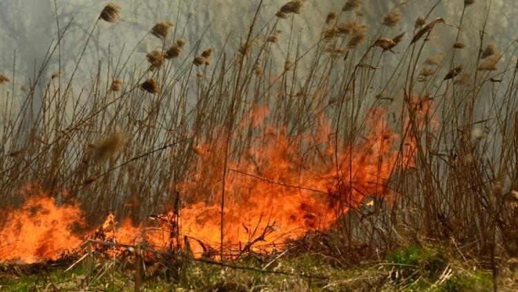 Három hektáron égett a nádas a Vekeri-tó mellett