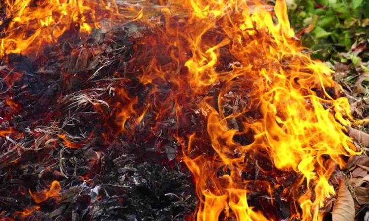 Kerti tűzgyújtás: Debrecenben is könnyen megégetheti magát!
