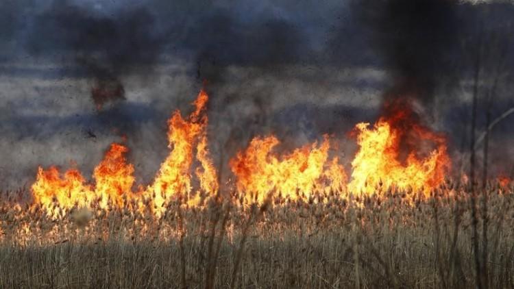 Lángol a nádas Szentpéterszeg külterületén