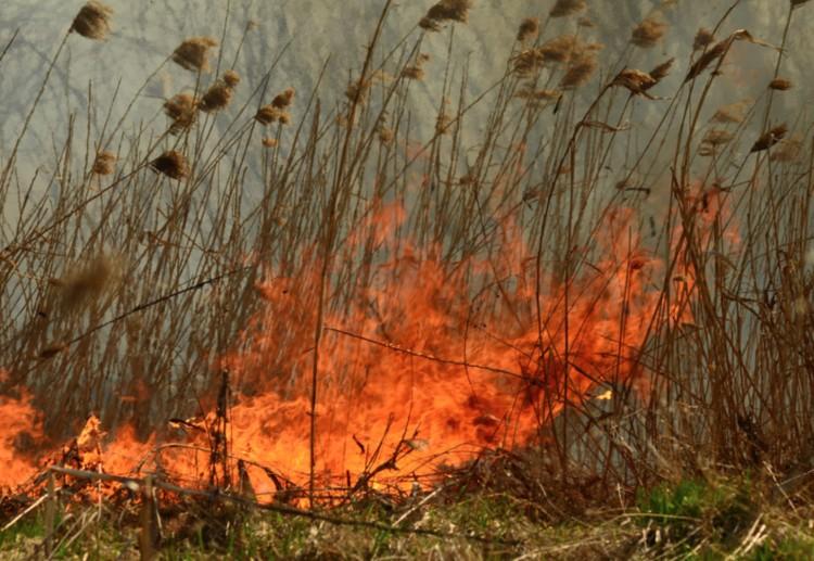 Tüzek mindenütt: gaz, nád, trágya égett
