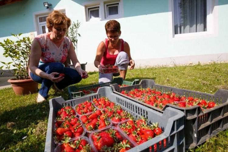 Hamarosan igényelhető a mezőgazdasági többlettámogatás