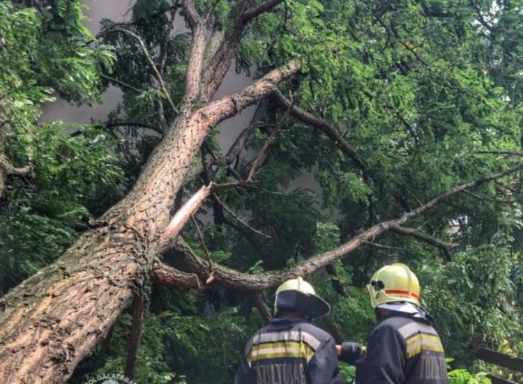 Sok gondot okoztak a fák Hajdú-Biharban
