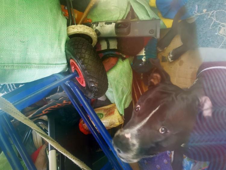 A forró autóban hagyta a kutyát, büntetőeljárás indult ellene