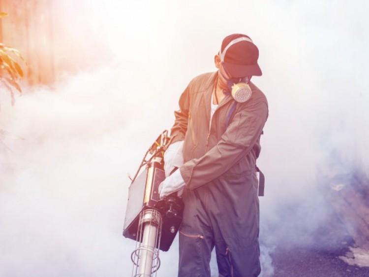 Debrecen polgármestere és a szúnyogok