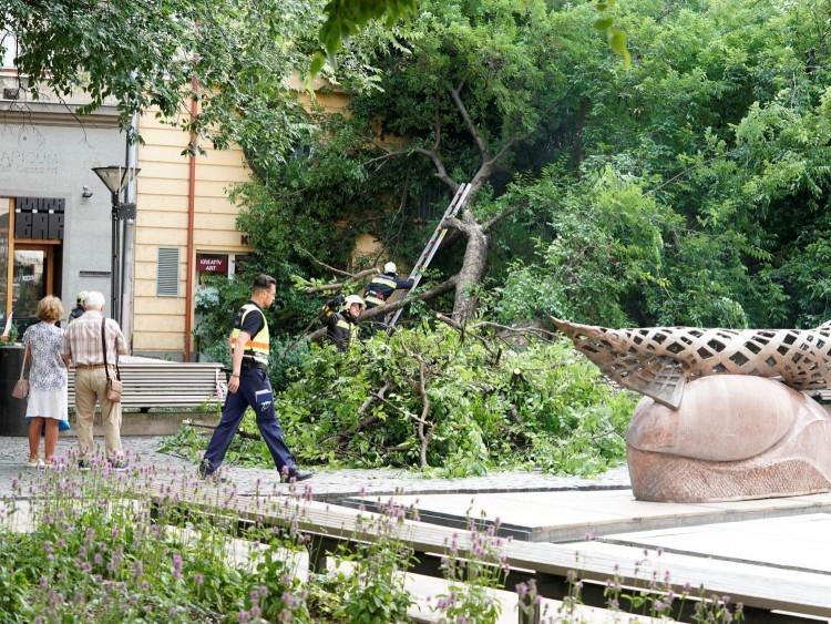 Hatalmas fa dőlt ki a debreceni belvárosban!