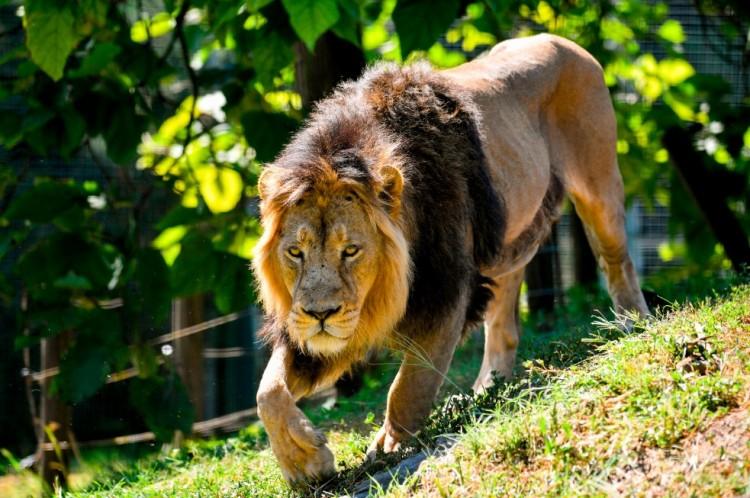 """Nagy király, de """"népét"""" a kihalás veszélye fenyegeti"""