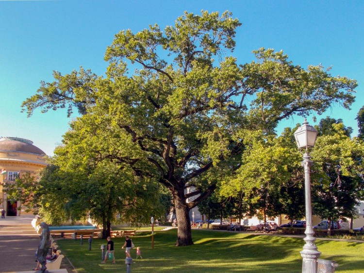 Eldönthetik, melyik legyen az Év Fája!