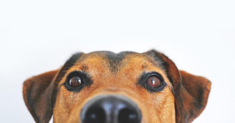Kutyát mentettek a hajdúböszörményi tűzoltók