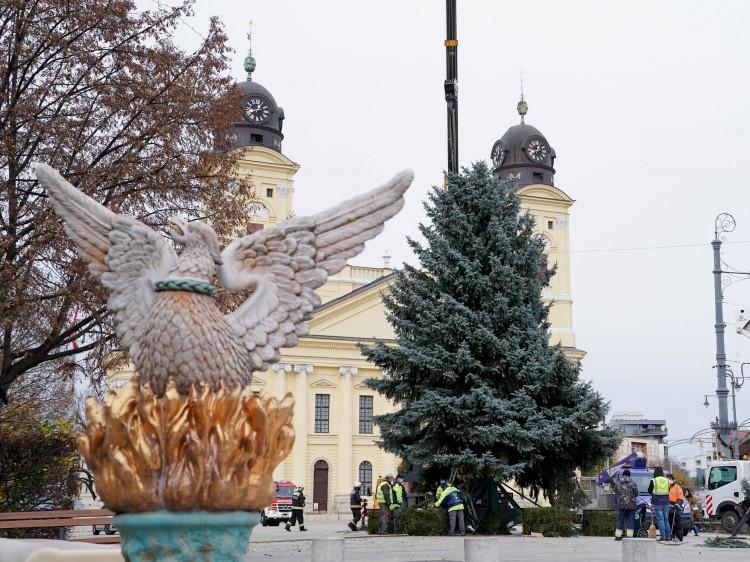Már csak a díszek hiányoznak Debrecen fenyőfájáról