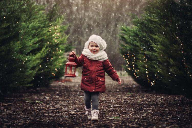 Csereerdő Szíve: vidd haza az élményt a fák közül!