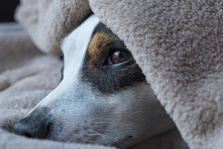 Csendes tűzijáték: a kutyát sem zavarja