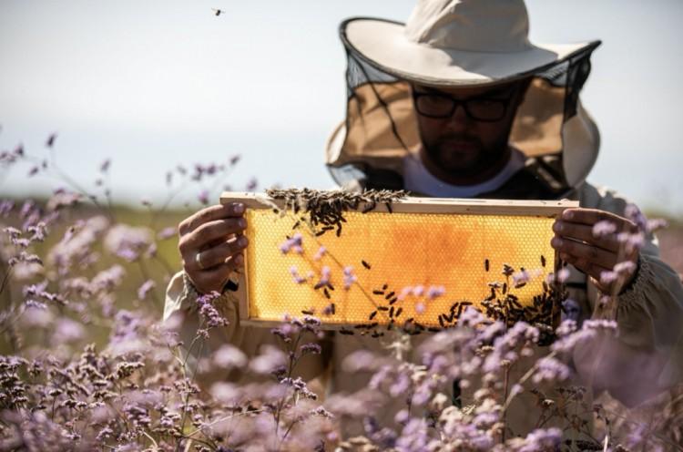 Védjegyet kapott és díjakat nyert a debreceni méhészet