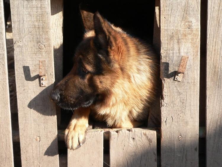 Gyorsan elítélnék a polgári kutyatolvajt