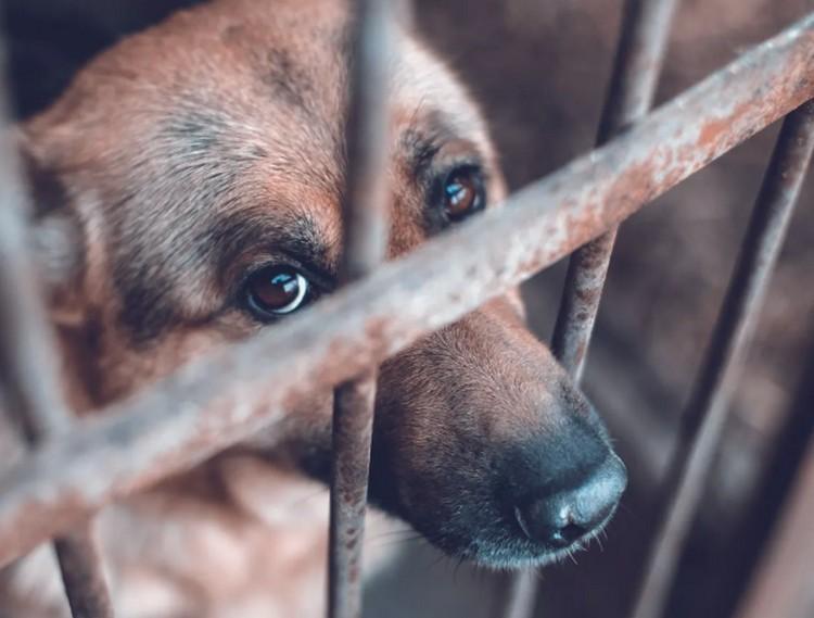 Kutyagyilkos hajdú-bihariak kerülhetnek börtönbe