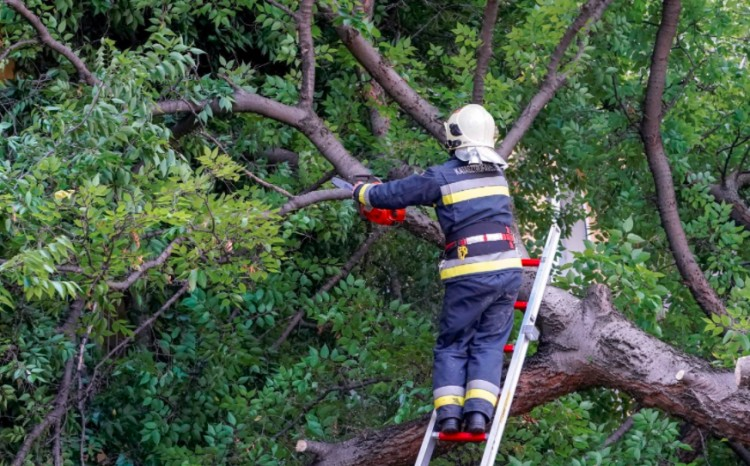 Ami a vihar után maradt: kidőlt fák és beázott pincék megyeszerte