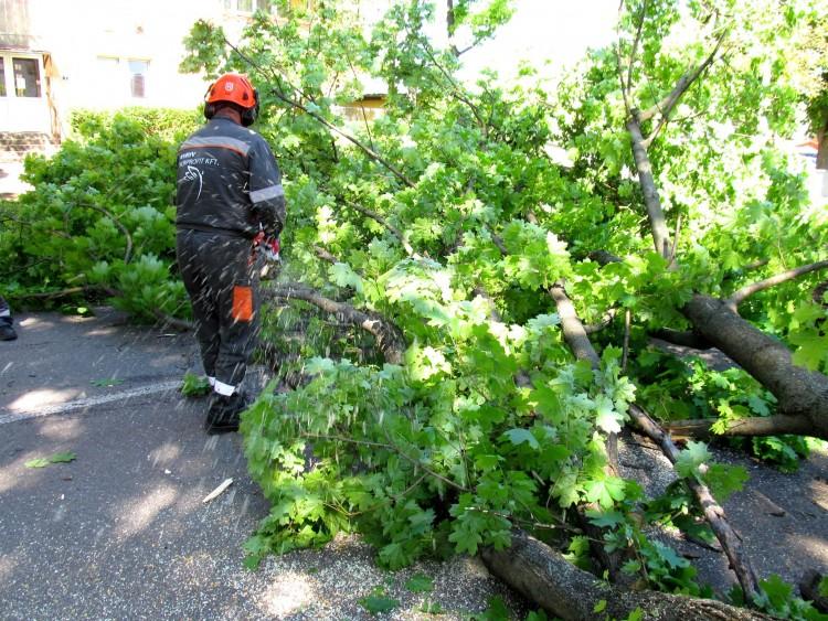 Melléképületre szakadt egy faág Debrecenben